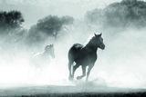 Arabian Horse 03.1 Eau de Parfum 100 ml_
